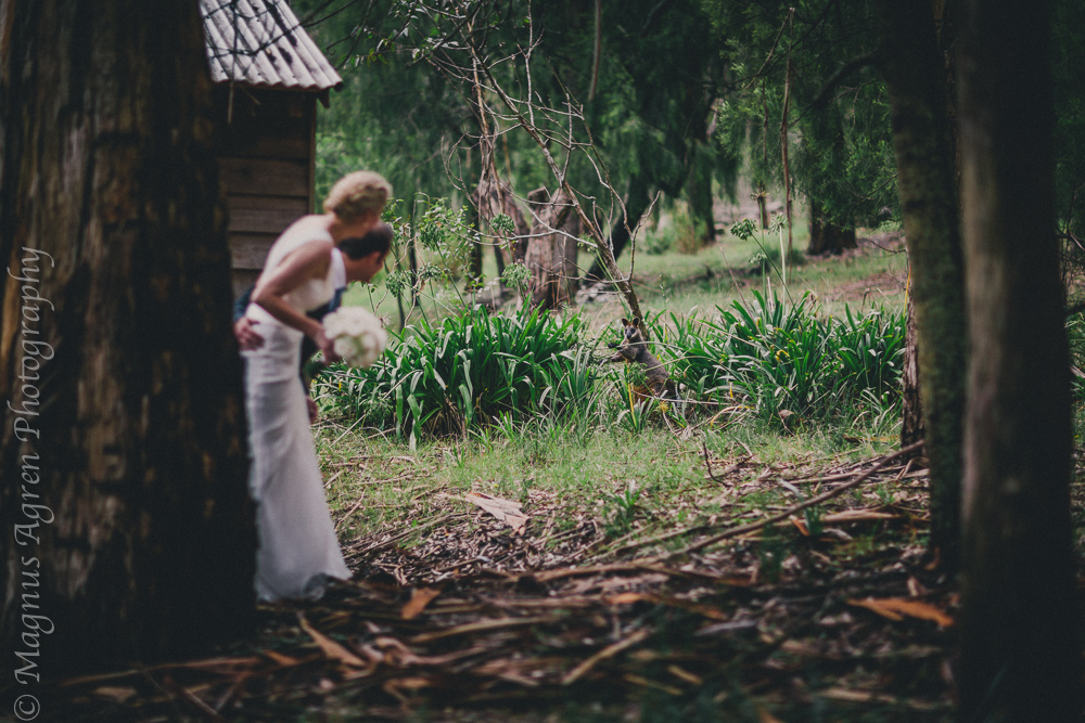 bowral weddings, bowral garden wedding, bowral wedding photographer, southern highlands photographer, southern highlands wedding photographer, wallaby