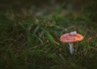 Wedding ring on petite mushroom