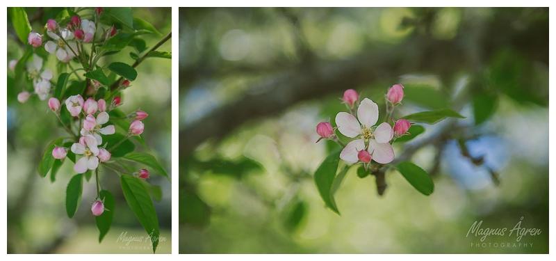 southern highlands spring blossom