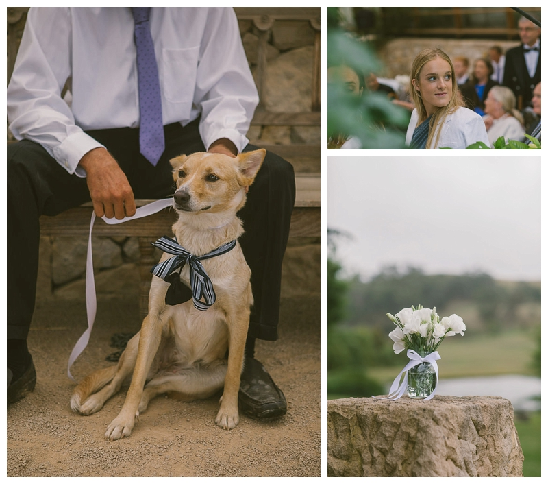 dog ring bearer, puppy, kelpie, bendooley estate