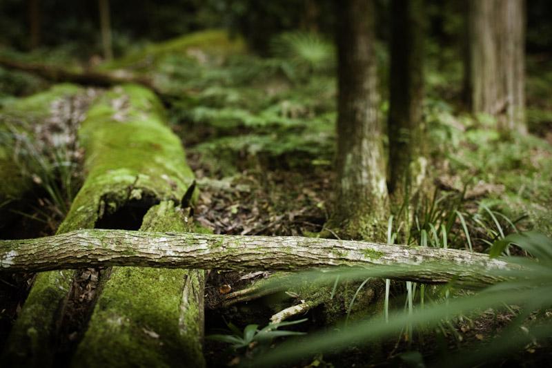 landscape photography, southern highlands photographer, goulburn photographer