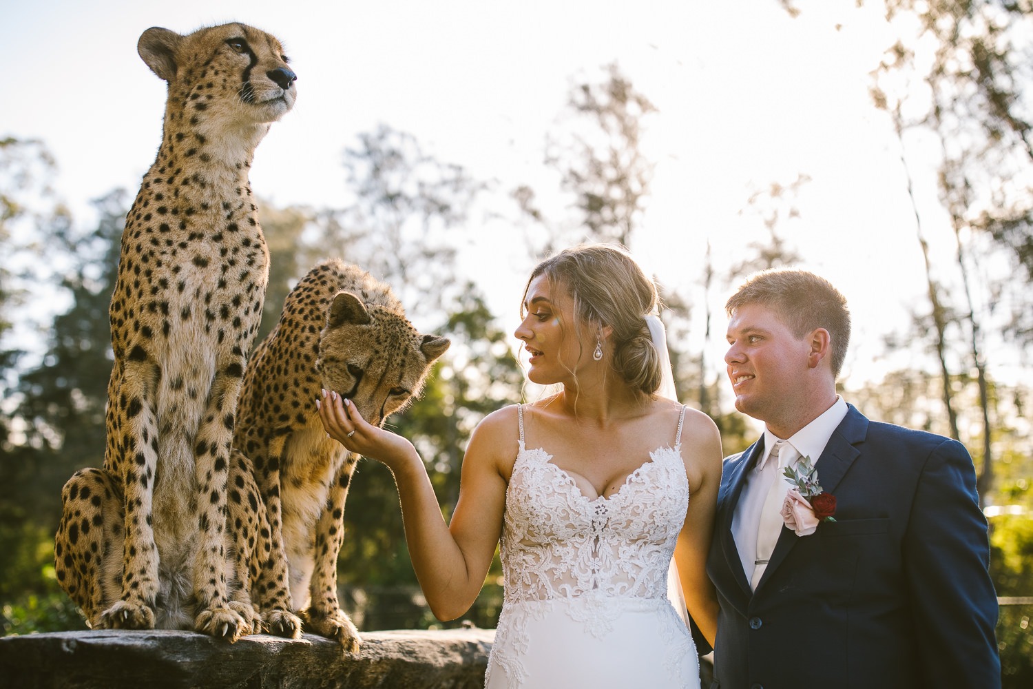 animal wedding photographer, southern highlands wedding photographer, southern highlands photographer, relaxed wedding photographer, country wedding photographer, goulburn wedding photographer, farm wedding photographer, not in your face photographer, sails resort port macquarie wedding photographer, billabong zoo port macquarie wedding photographer, harbour wedding, cheetah wedding photographer, cheetah bride, in with the cheetahs