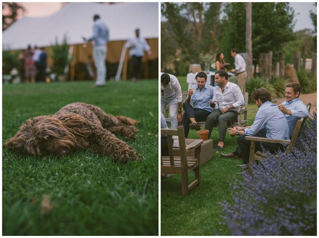 animals of weddings, dog wedding photographer, goulburn photographer, southern highlands