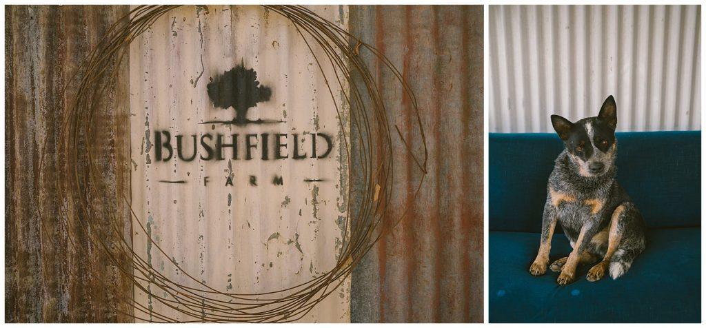 bushfield farm wedding, gundaroo wedding photographer, country wedding photographer, outback wedding, bush wedding, blue heeler, dog